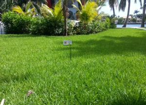 Lawn and Ornamental Care South Florida